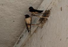 das dunkle nest